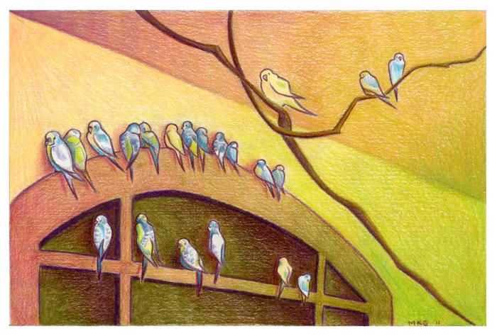 Parakeets Illustration